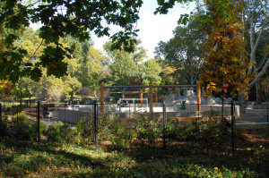 View from outside the playground, showing landscape fence and new plantings.