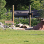 glenden park natural playground playscape spokane1